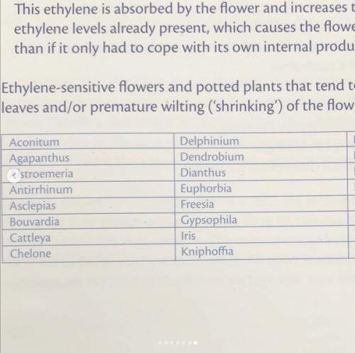 уход за срезанными цветами